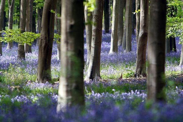 Photo of the day – Bluebells