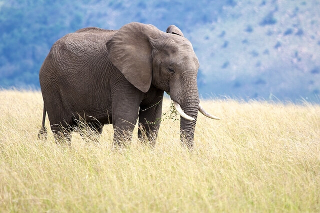 Photo of the day – Elephant in the long grass
