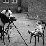 Creative Commons panda taking photograph by cheryldecarteret_Flickr
